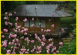 Botanical Gardens Ft Worth Tea House And Cherry Blossoms At The Japanese Garden Picture Of