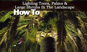 Landscape Up Lights How To Light Trees Palms And Large Shrubs In The Landscape