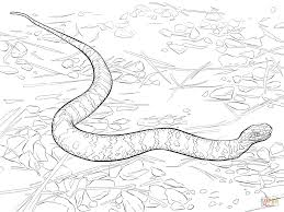 cottonmouth snake coloring page free printable coloring pages