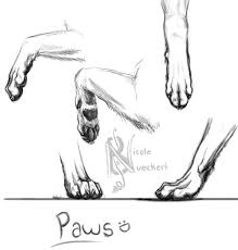 wolf sketch paw study by kuvari on deviantart