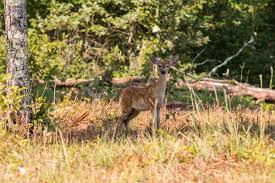 backyard explorer u2013 sandhill wildlife area devil u0027s lake state