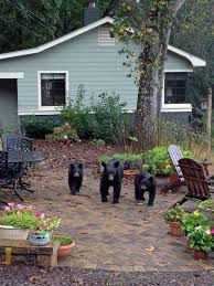 in asheville locals and black bears learn to get along