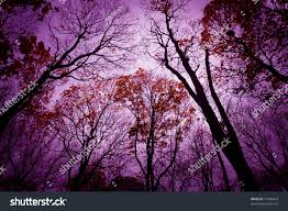 purple halloween background halloween background mysterious dead forest purple stock photo