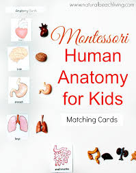printable montessori curriculum montessori human anatomy activities free printables natural