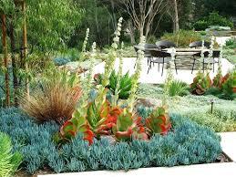 contemporary landscaping contemporary landscape plants stzy co