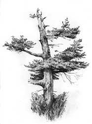 how to draw trees part 1 by diane wright