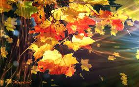 imagenes animadas de otoño 32 imágenes animadas hojas de otoño 1000 gifs