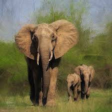 elephant family and animals topaz discussion forum