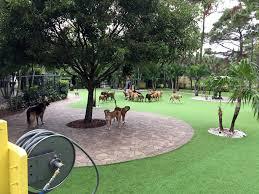 Dog Backyard Playground by Installing Artificial Grass Maywood California Backyard