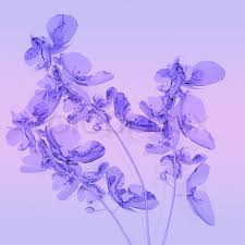 purple orchids purple orchids on lilac background stock photo colourbox
