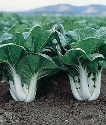 Fall Vegetable Garden Plants do you think your gardening is over when fall arrives no way