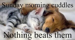 Sunday Morning Memes - sunday morning cuddles nothing beats them sunday cuddles quickmeme