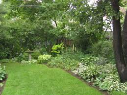 Good Backyard Trees by Best Backyard Trees For Privacy Backyard And Yard Design For Village