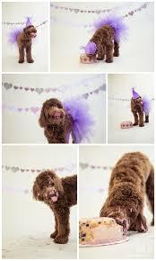 best 25 dog first birthday ideas on pinterest dog bday cake