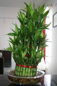 Best Indoor Plants For Oxygen by Plant Stand Indoor Plants Table Fragment Interior Stock Photo