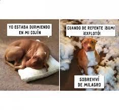 Memes En Espaã Ol Para Facebook - estaba durmiendo en mi cojín http www diverint com memes en