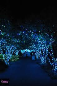 Botanical Garden Atlanta Lights Atlanta Botanical Garden U0027s Annual Lights
