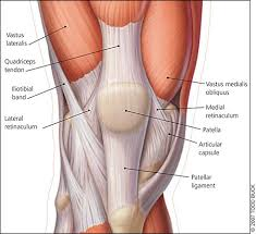 Nerves In The Knee Anatomy What Is A Retinaculum