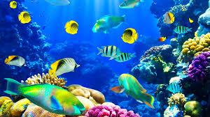 fishes nature underwater fishes ocean fish sea sealife koi live