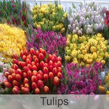 bulk flowers frans flowers bulk flower orders