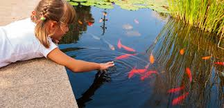 aquaforte reliable and innovative pond products