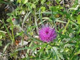 Free Images Herb Produce Botany Flora Wildflower Wild