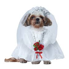 puppy thanksgiving dog wedding clothes baxterboo
