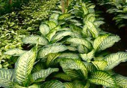 plantes pour bureau aménagement intérieur pour bureau aude plantes la nature s invite