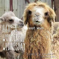 Hump Day Camel Meme - happy hump day meme images and pics