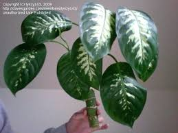 common household plants super easy houseplants love philodendron