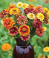jazzy mix zinnia seeds and plants annual flower garden at burpee com