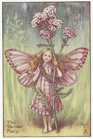 flowers yarrow fairy old original vintage print frontispiece