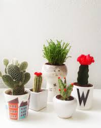 the comeback of the cactus instagram wimke n tolsma flora