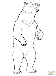 black bears coloring pages free polar bear print cute