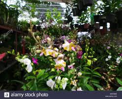 Decorative Plants For Home Garden Plants For Sale In Quezon City Home Outdoor Decoration