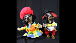 crusoe u0026 oakley dachshund are the u0027cuteness clowns u0027 for halloween