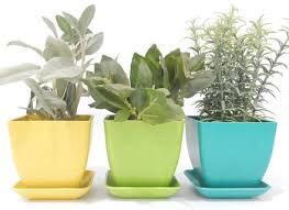 where to buy indoor herb garden kit youtube dunneiv