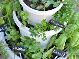Kitchen Herb Garden Design Garden Ideas Wonderful Small Kitchen With Hanging Herbs
