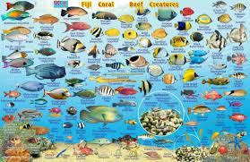 Map Of Fiji Fiji Map U0026 Reef Creatures Guide Franko Maps Laminated Fish Card
