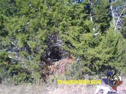 Natural Hunting Blinds Product Review How To Turn Invisible With The Ghost Blind