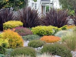 ornamental grasses design for your garden