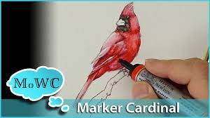 how to paint a cardinal with winsor newton watercolor markers