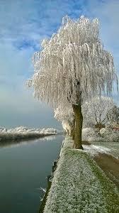 frozen tree 144014 frozen tree push z for perf flickr