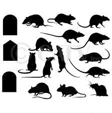 amazon com rats mice doors set of 17 vinyl lettering decal home