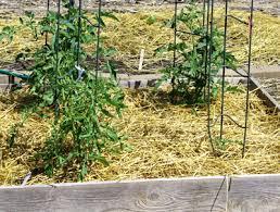 stylish straw mulch vegetable garden 17 best ideas about hay bale