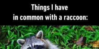Funny Raccoon Meme - animals archives page 13 of 14 humor memes com