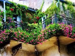 pflanzen f r balkon pflanzen fr balkon und garten ber die blumen pflanzen balkon über