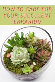 indoor succulent garden care gardening ideas