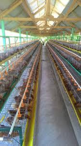 Termometer Kandang Ayam kandang house informasi teknis dan menjual alat kandang ayam
