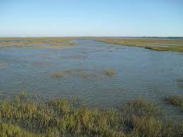 spring tide in the salt marsh u2013 rebecca heisman